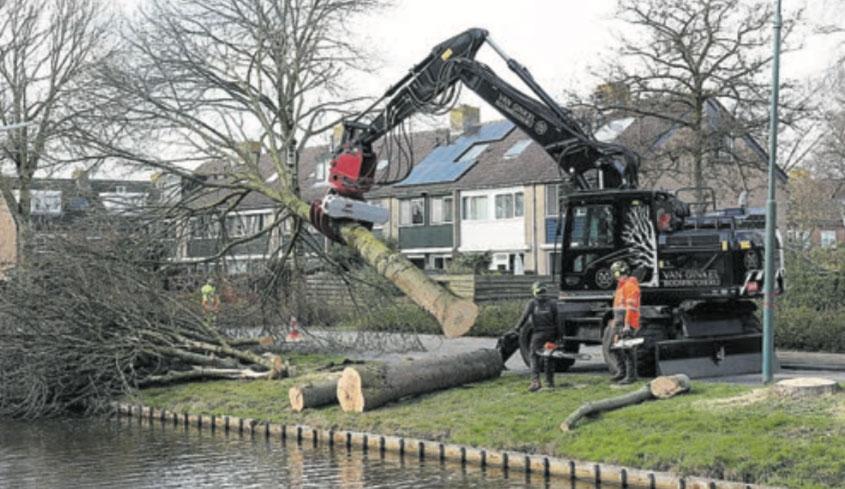 Bomen Pastoor Kannelaan vlot gekapt