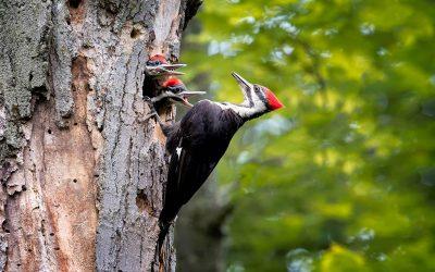 Van Ginkel wenst alle vogels een prachtig en rustig broedseizoen