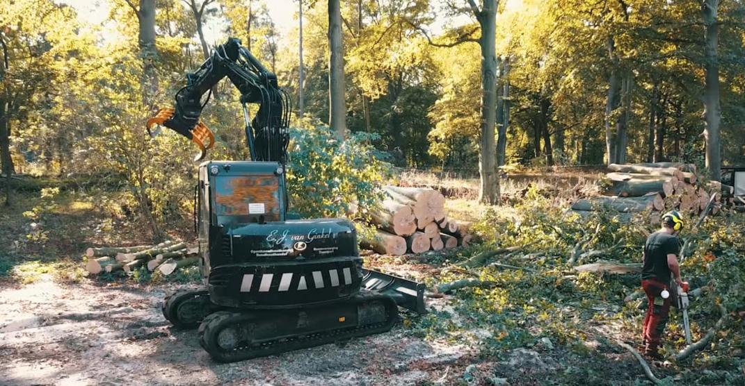 200 jaar oude bomen in Heemstede aan het eind van hun levenscycus