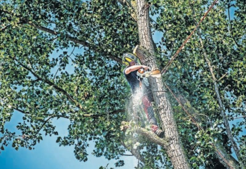 Bomenkap in gemeente Capelle aan den IJssel